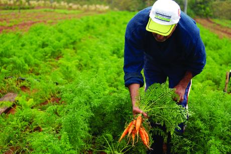 Comer con los ojos abiertos. Agroecología en Paraguay